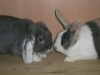 2-kaninchen